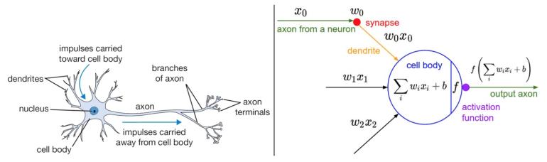 Schematische Darstellung eines Neurons aus der Biologie (links) und mathematische Darstellung für Neuronale Netze in der Computerwelt (rechts) Source: http://cs231n.github.io/neural-networks-1/